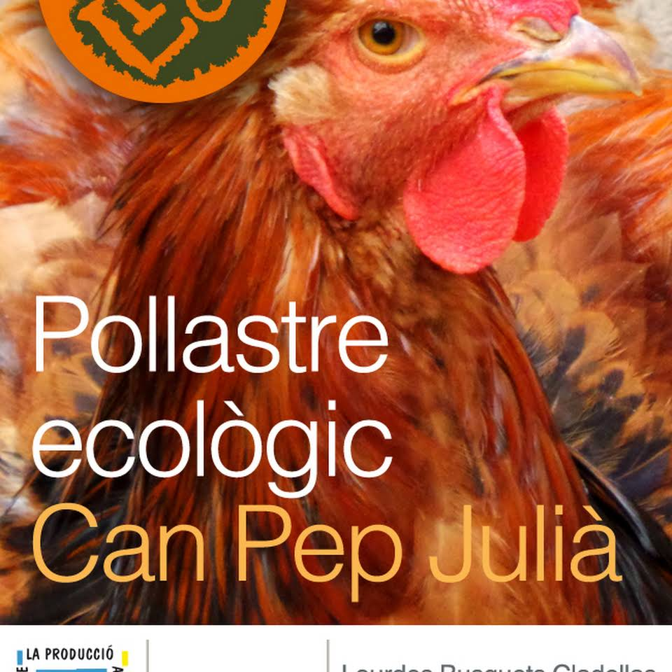 Pollastre ecològic Can Pep Julià
