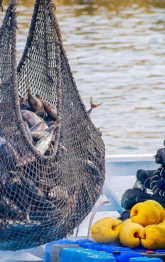 Peix Peixateria Joan Marés